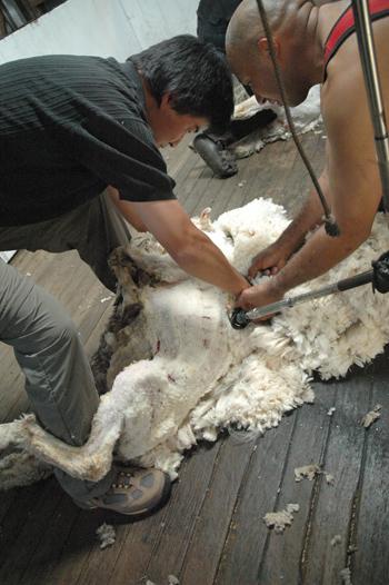 tom shearing