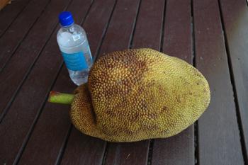 jakfruit