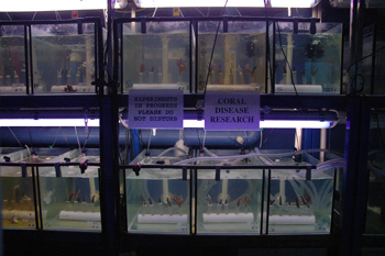 reef research