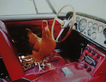 GTE chicken coop