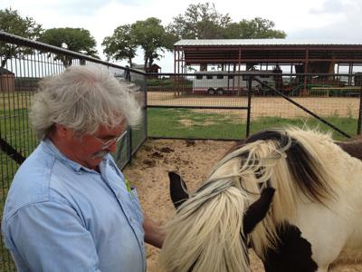 bob's horses
